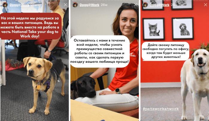Инстаграм истории. История Royal Canin